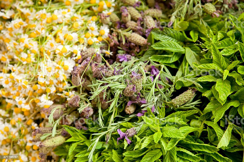 Chamomile mint and lavender royalty-free stock photo