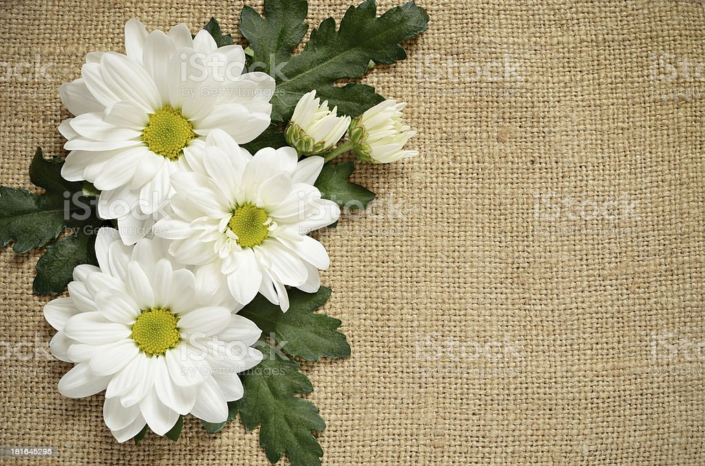 Chamomile on canvas royalty-free stock photo