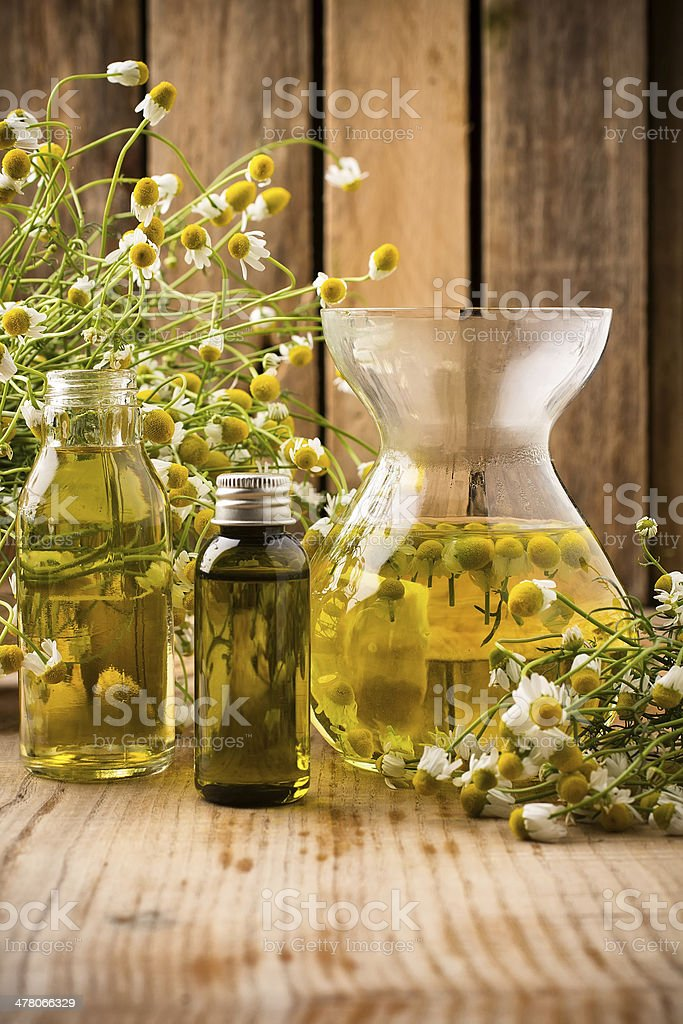 Chamomile. royalty-free stock photo