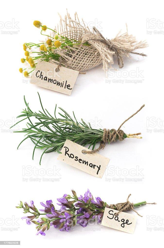 chamomile, rosemary and sage royalty-free stock photo