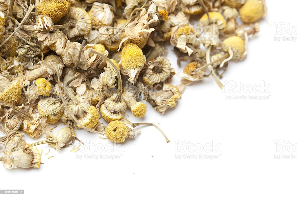 Chamomile Tea Flowers royalty-free stock photo