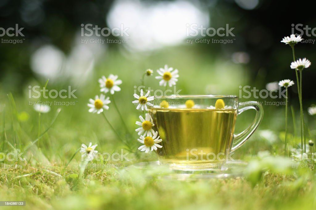 Chamomile tea in a field of flowers royalty-free stock photo