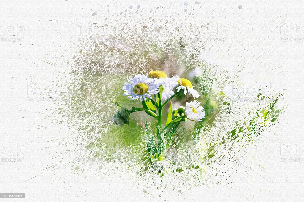 Chamomiles. Design in the style watercolor on canvas. stock photo