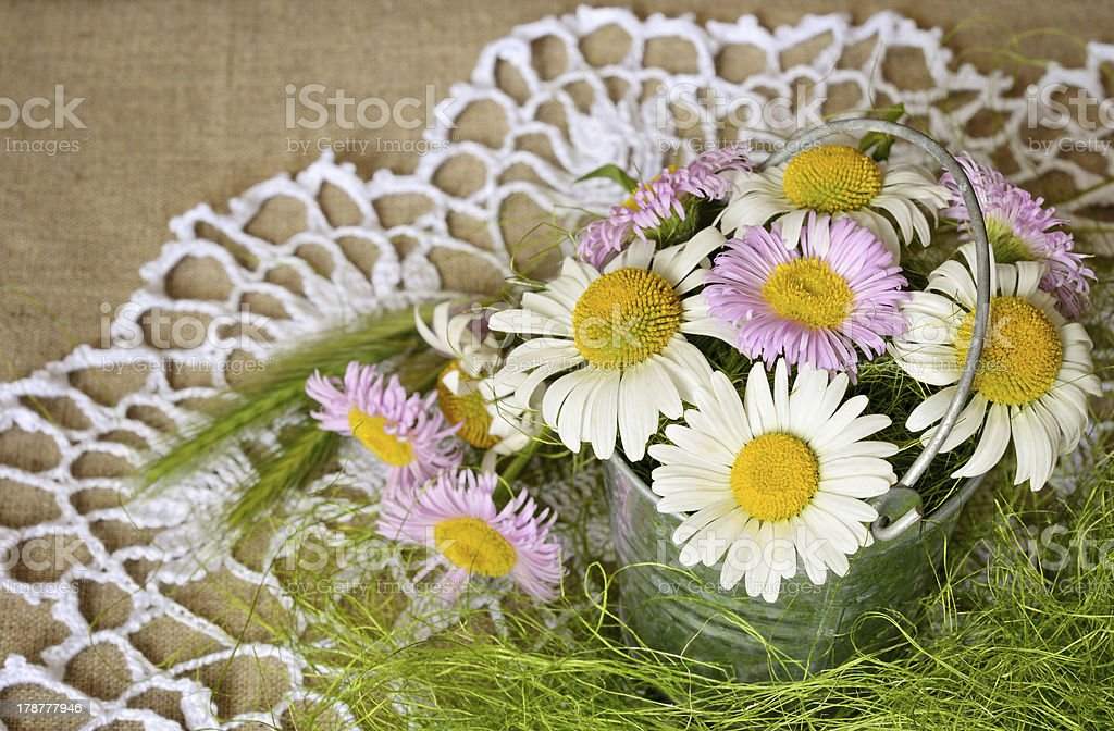 Chamomiles in a bucket royalty-free stock photo