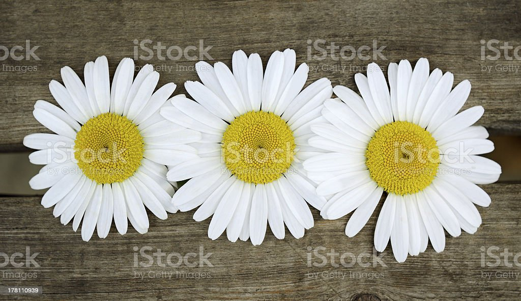 Chamomiles on wooden boards royalty-free stock photo