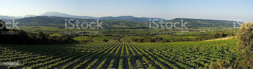 champ de vignes panoramique royalty-free stock photo