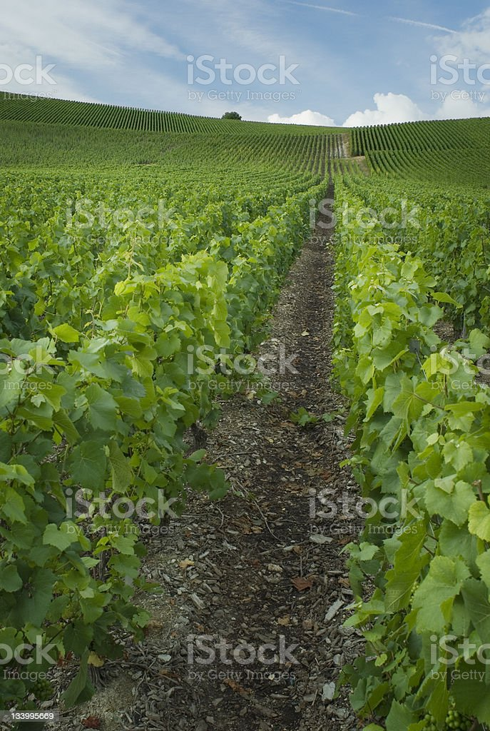 Champagne France royalty-free stock photo