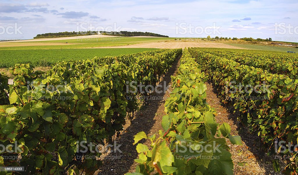 Champagne - France stock photo