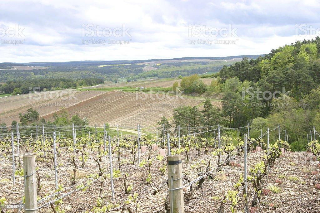 Champagne France, vineyard stock photo