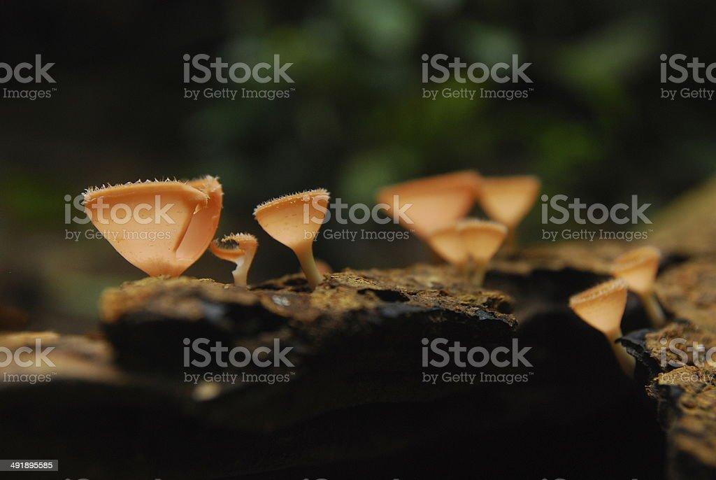 Champagne mushroom stock photo