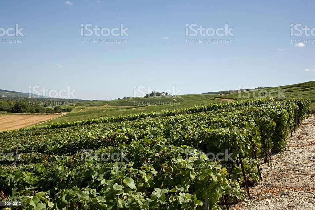 Champagne region in August stock photo
