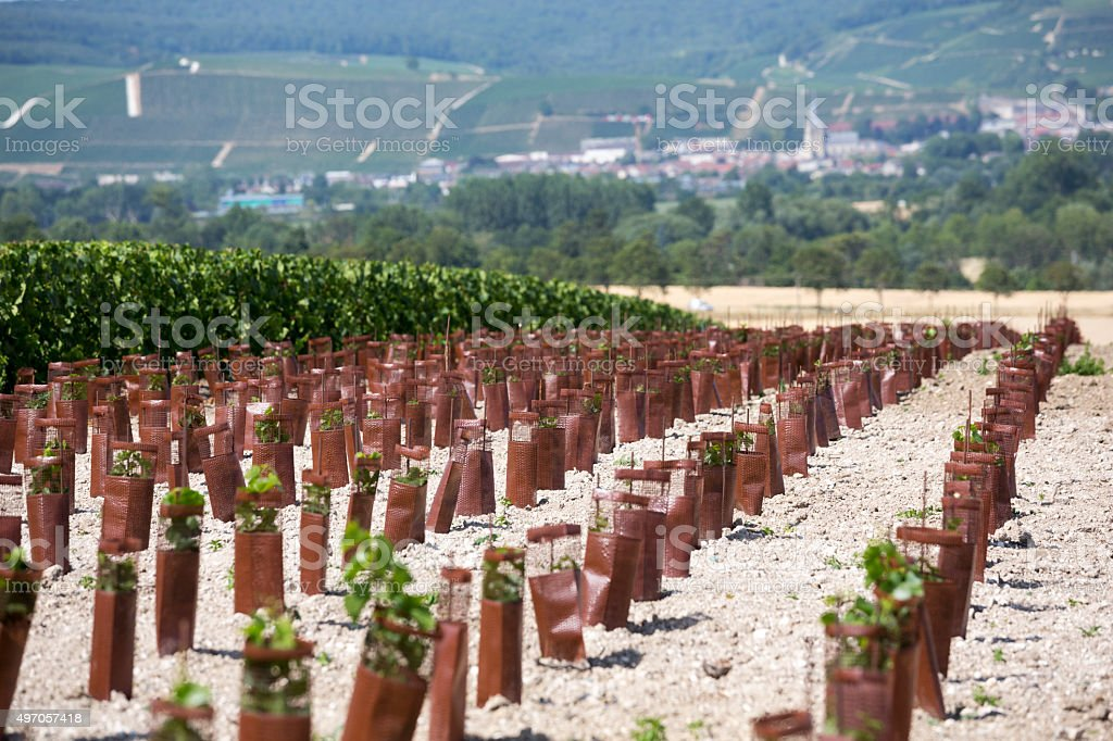 Champagne Region of France, Summer in Europe Wine Country stock photo