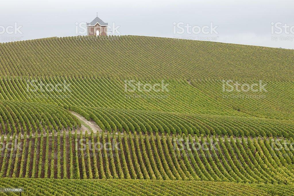 Champagne Vineyard stock photo