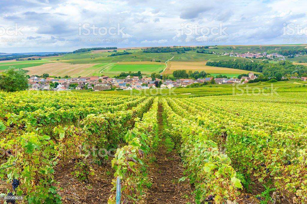 Champagne Vineyards at sunset, Montagne de Reims stock photo