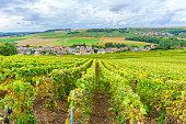 Champagne Vineyards at sunset, Montagne de Reims