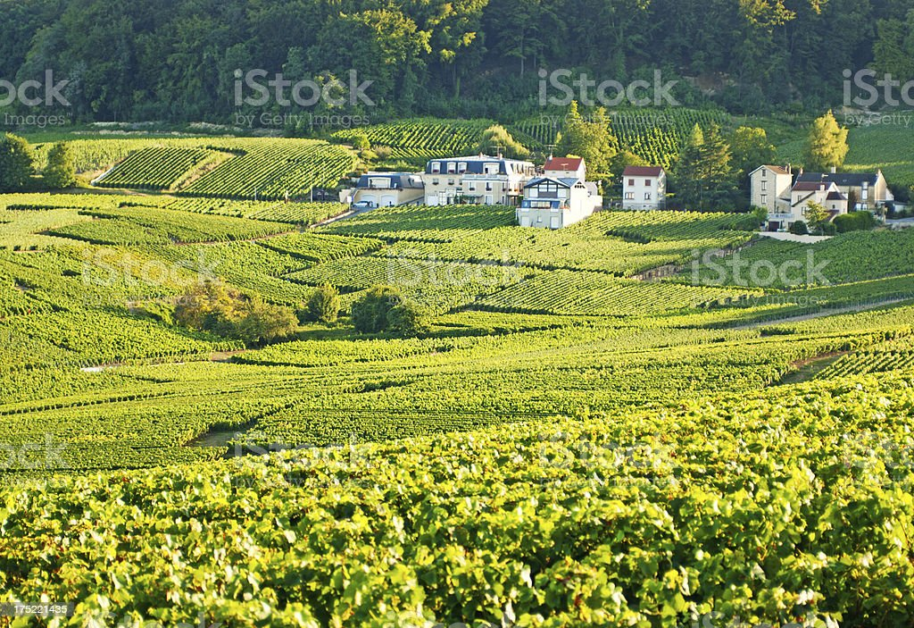 Champagne vineyards in Cramant royalty-free stock photo