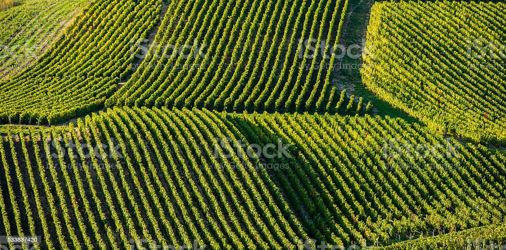Champagne vineyards in the Cote des Bar area of Aube stock photo