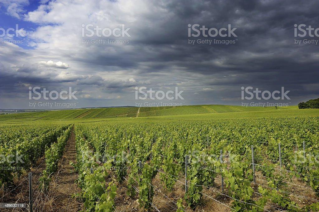 Vignoble de Champagne stock photo