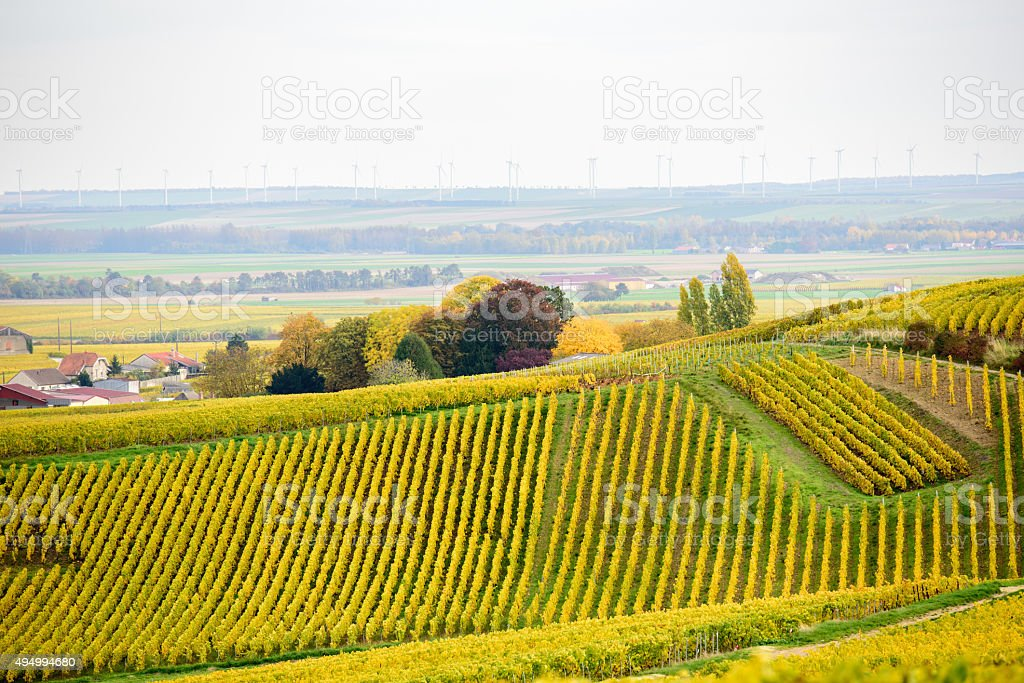 Champagne wine fields during autumn stock photo