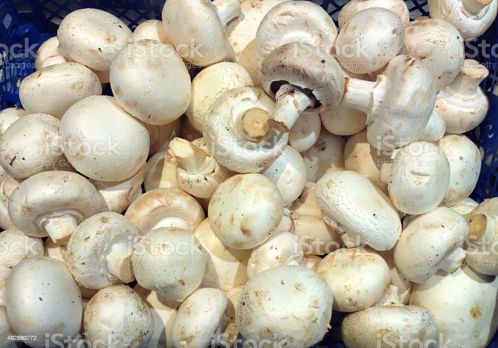 Champignon Mushroom stock photo