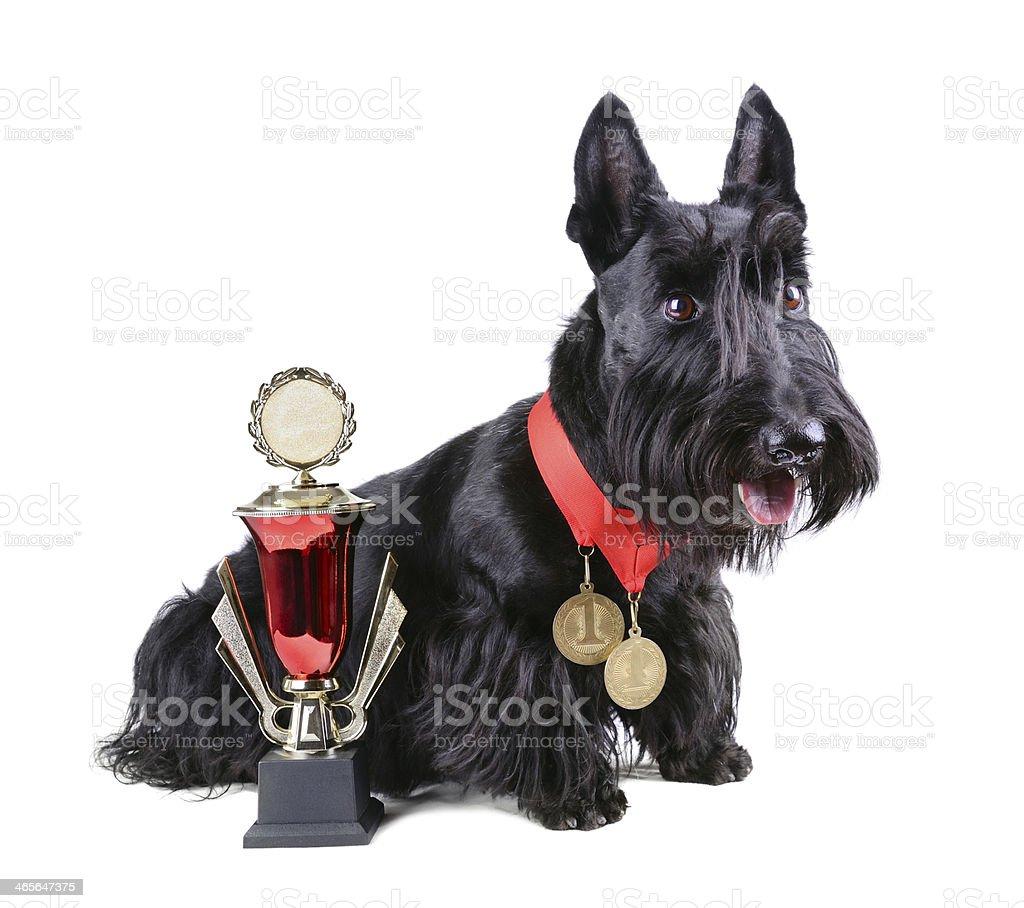 Champion stock photo