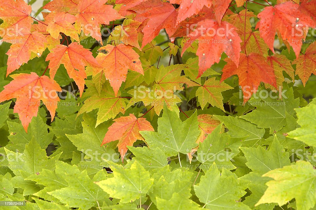 Change of colors royalty-free stock photo