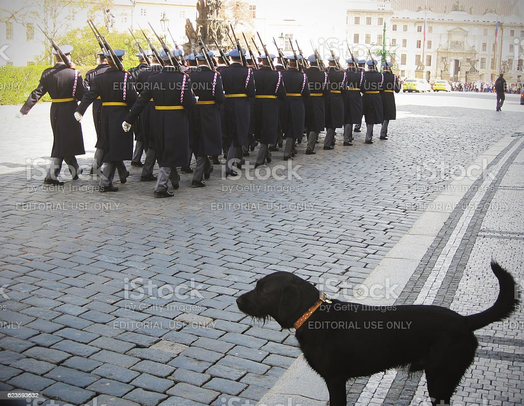 Change of guard of the Castle of Prague and dog stock photo