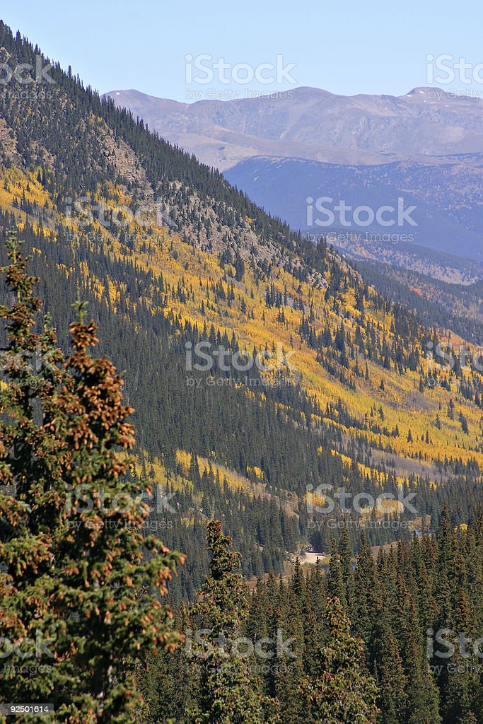 Changing Aspens royalty-free stock photo