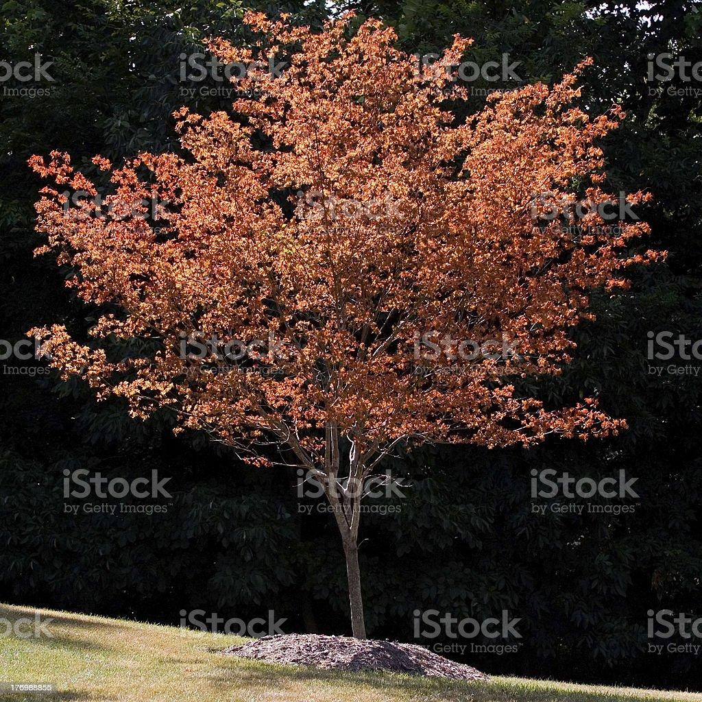 Changing Seasons stock photo
