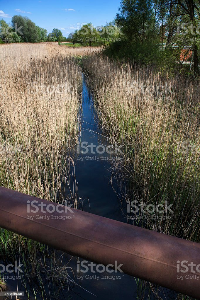 Channel among the reeds stock photo