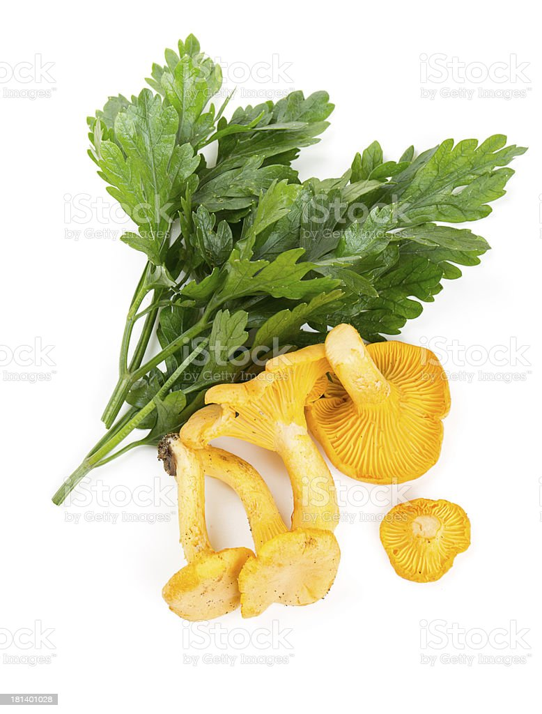 chanterelle and parsley leaves stock photo