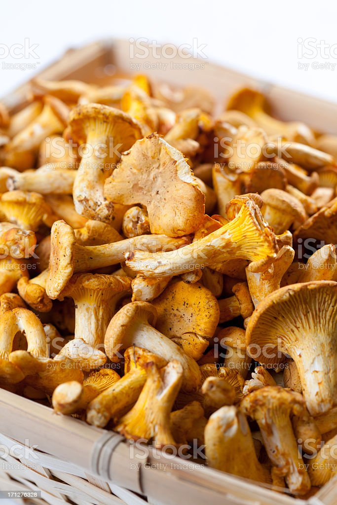 chanterelle as background stock photo