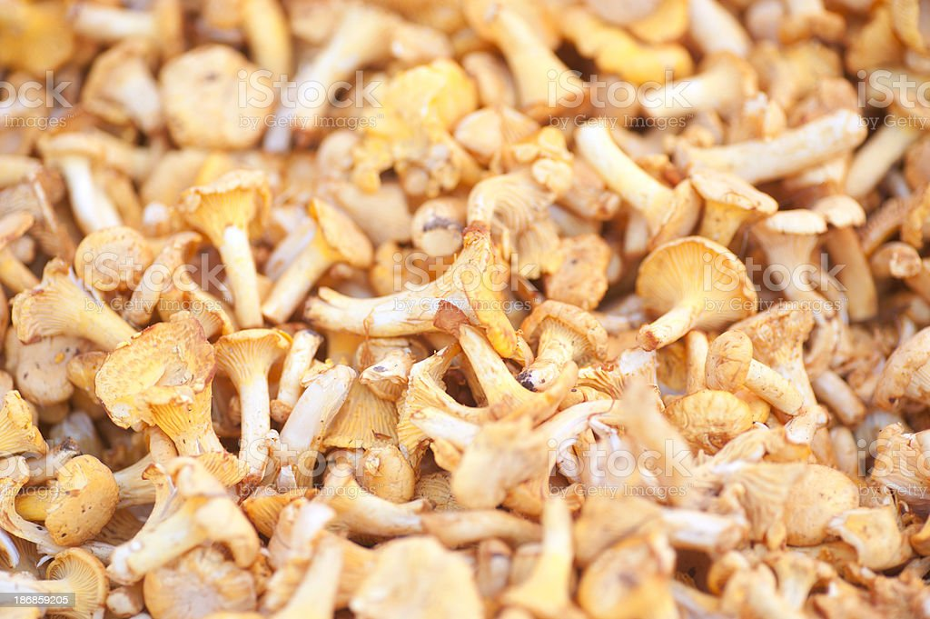 chanterelle background in full-frame royalty-free stock photo