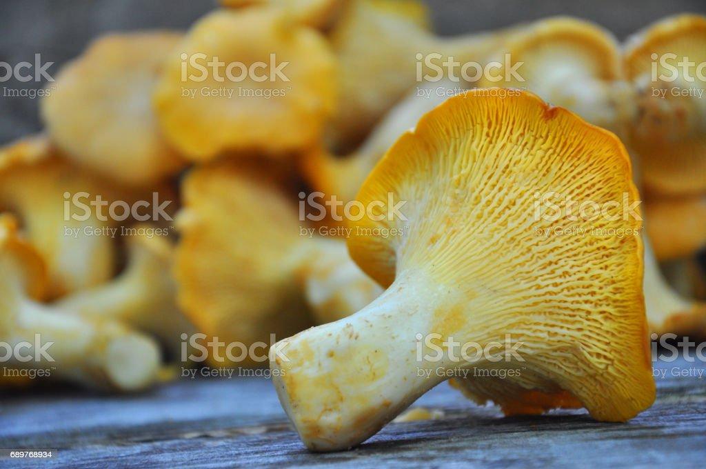 Chanterelle mushroom on rustic wooden table. stock photo