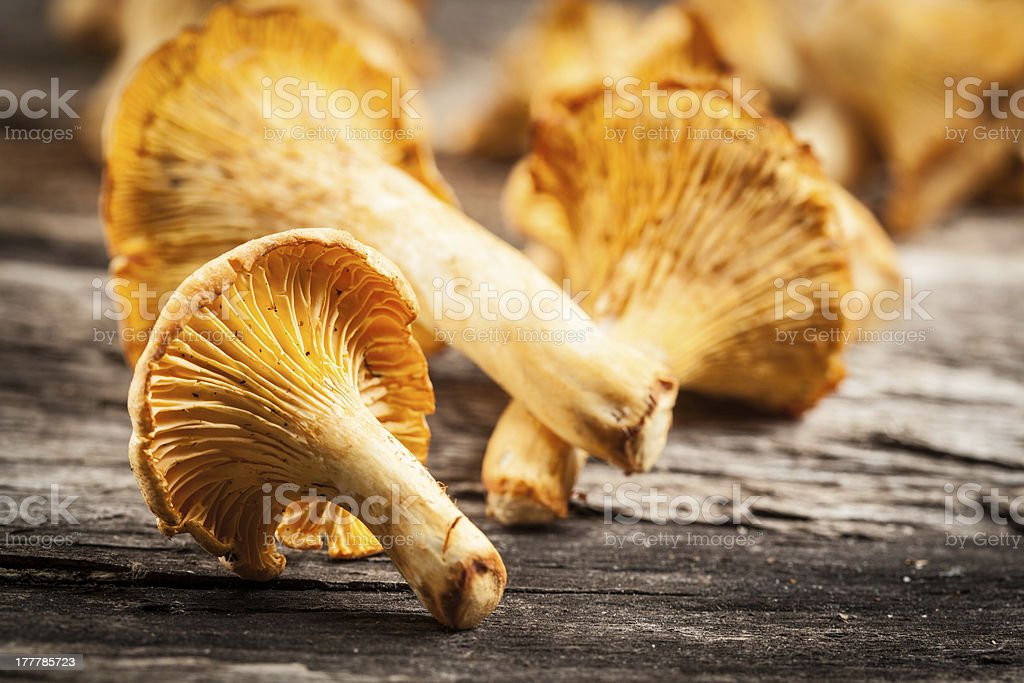 chanterelle mushrooms. royalty-free stock photo