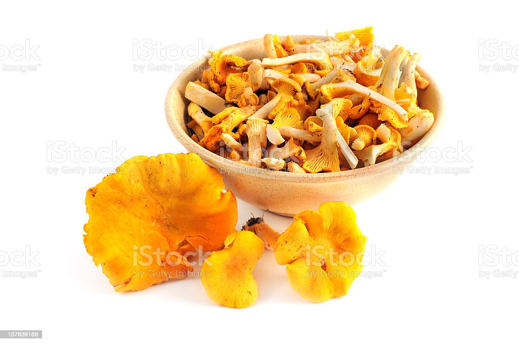 chanterelle or golden chanterelle- Pfifferling oder Eierschwamm (Cantharellus cibarius) stock photo