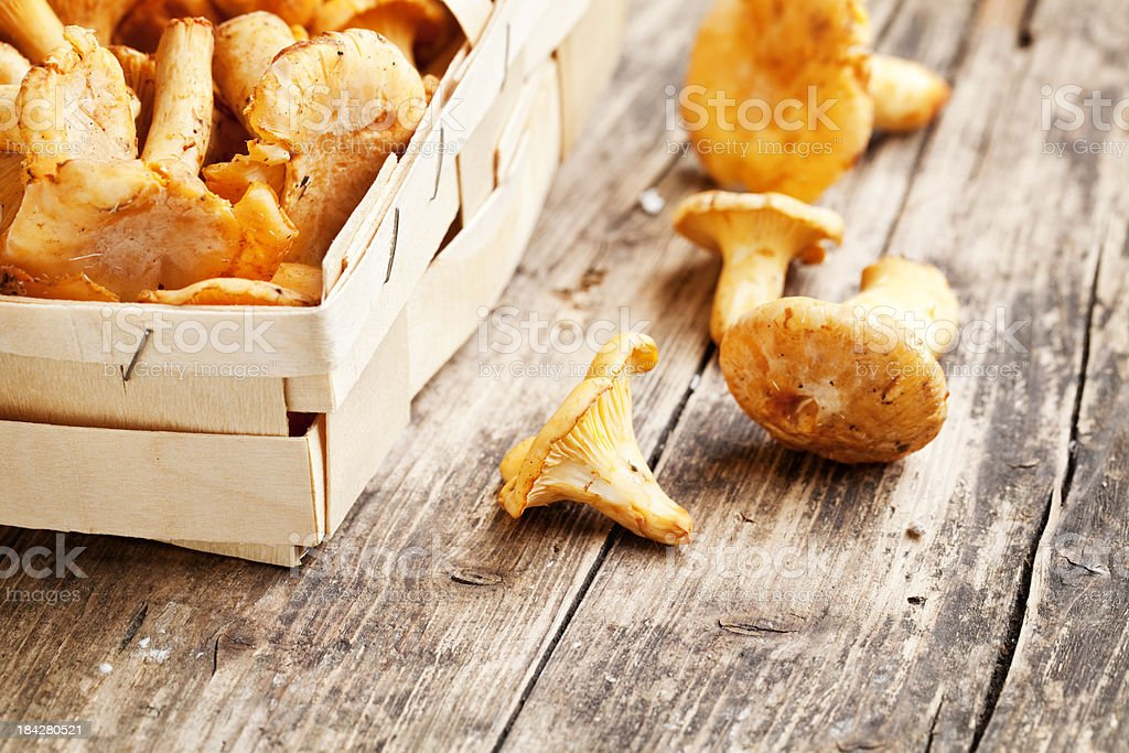 chanterelle royalty-free stock photo