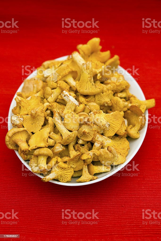 Chanterelles on red stock photo