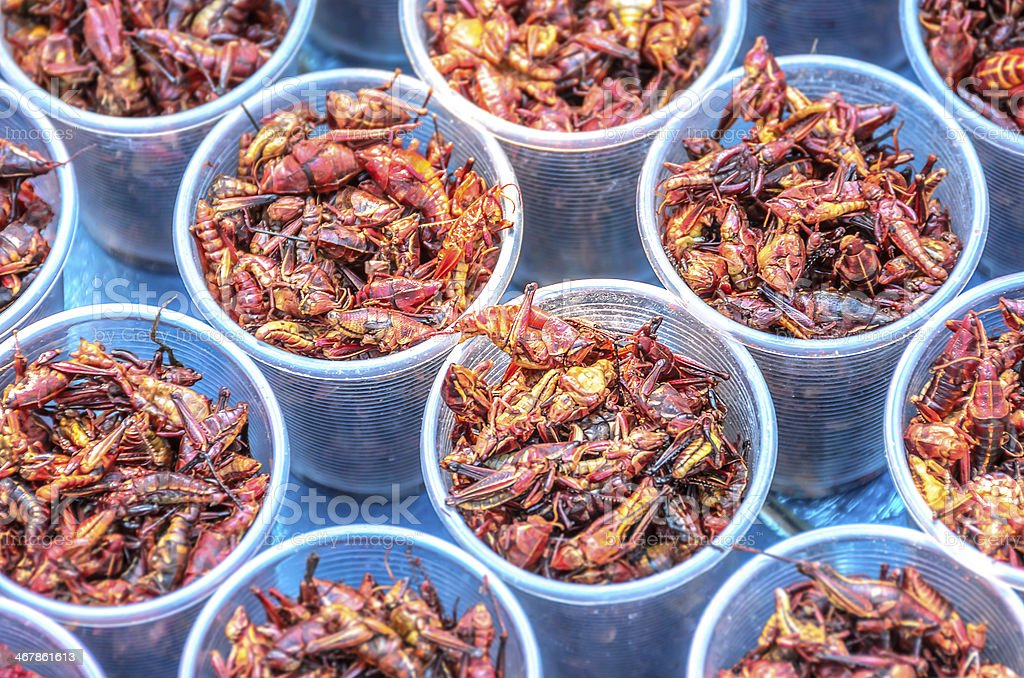 Chapulines, Edible Grasshoppers stock photo