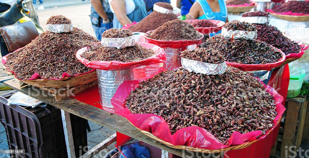 Chapulines, mexican food stock photo
