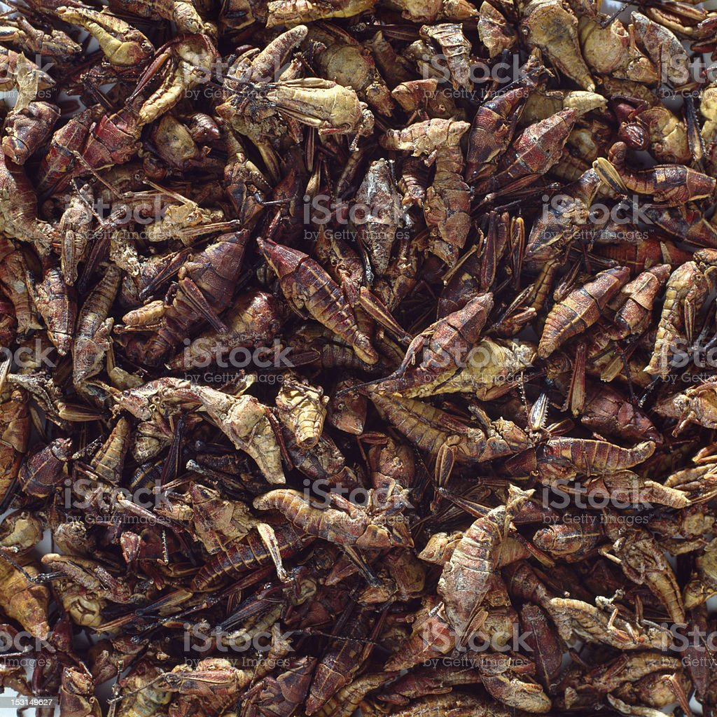 Chapulines, typical food in Oaxaca, Mexico stock photo