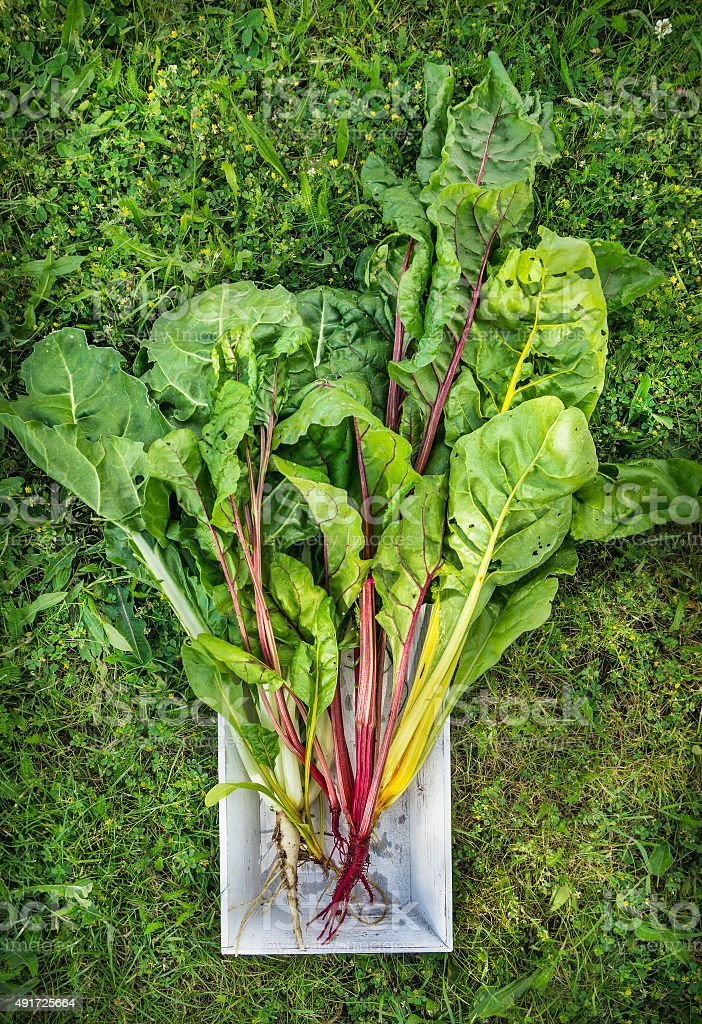 chard three colors in white wooden tray on grass background stock photo