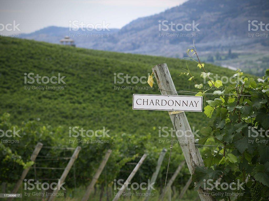 Chardonnay fields royalty-free stock photo
