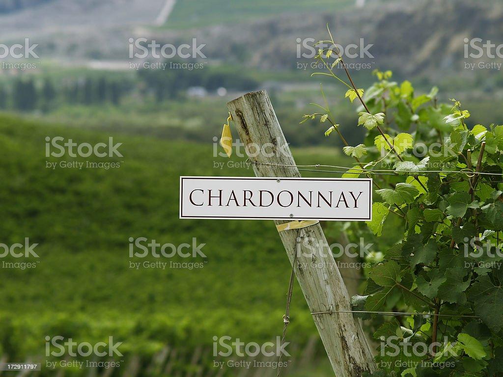 Chardonnay grapevines stock photo