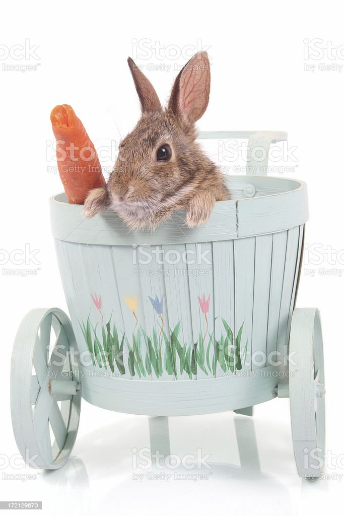 Chariot of rabbit royalty-free stock photo