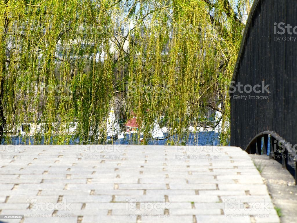 Charles River Walkway, Boston, MA, Springtime, Weeping Tree, Bridge stock photo
