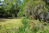 Charleston Magnolia Plantation Gardens