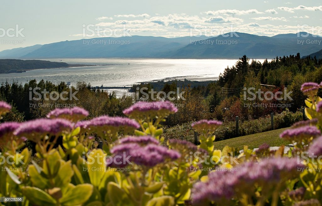 Charlevoix landscape with stonecrop flowers stock photo