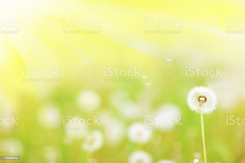 Charm of summer royalty-free stock photo