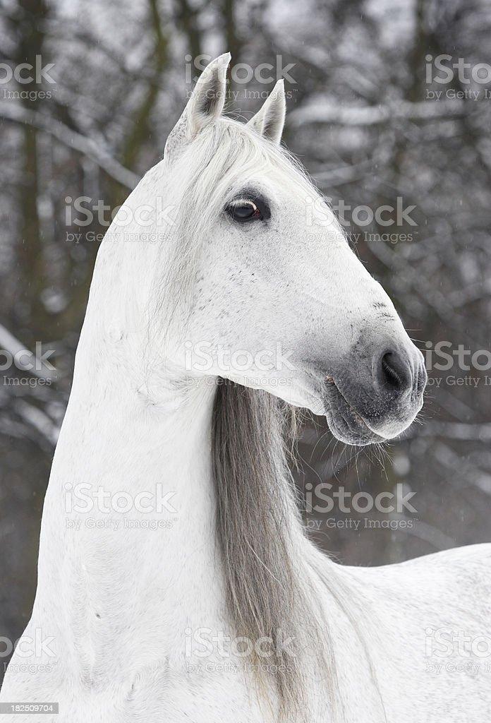 Charming angel royalty-free stock photo